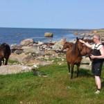 Hästarna har det fint ute i den fria naturen