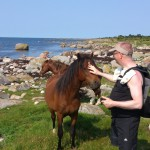 Lugn och fin häst!
